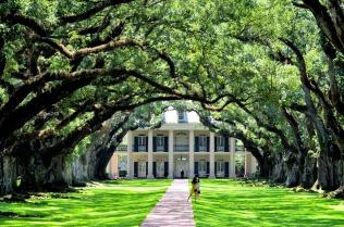 Oak Alley from the Oaks 2